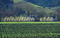 USA, California, Heldsberg, Sonoma County, Dry Creek road, Vineyards