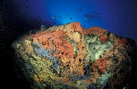 Italy, Aeolian Islands, Vulcano island, diver exploring seabed