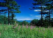 Takamine Highland, Komoro, Nagano, Japan