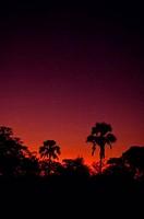 BOTSWANA, OKAVANGO DELTA, MOMBO ISLAND, SUNSET