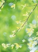 Green Leaves, Akita, Japan