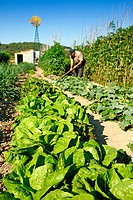 Kitchen garden, Lleida, Catalonia, Spain