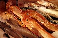 Various types of fresh sea fish