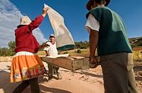 Peru, Cordillera Blanca: Quinoa treshing