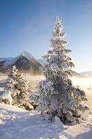 Hoar_frost covered Spruce trees on shore of Turnagain Arm during Winter in Southcentral Alaska