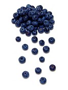 Heidelbeeren / blueberries Vaccinium myrtillus