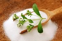 Sweet herb  Stevia rebaudiana
