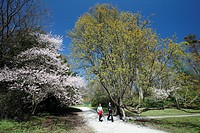 Power Walkers, two women power walking in park, springtime, Germany