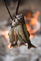 Fish cooking over a fire in Kings Canyon National Park, CA.