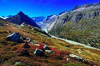 Alps, Alpine flora, Alpine panorama, view, mountains, mountain panorama, mountain lake, peak, Bern, Bernese Alps, Bernese Oberland, cliff, rock, flora...