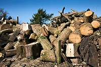 Timber yard. Wood waiting to be chopped in a timber yard.