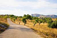 Rural road in Mediterranean countryside