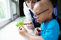 Boy looking at plant experiment (thumbnail)