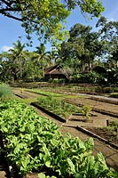 Organic farm at San Benito , Lipa City, Philippines.
