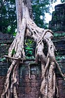 Ta Prohm temple and tree roots Tetrameles nudiflora  Angkor temples  Cambodia, Asia