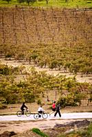 A family biking and jogging through vineyards in the Herault of France