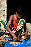 A fisherman sorting shrimps for drying, in Dublar Char, an island located at the southern boarder of the Sundarban, facing the Bay of Bengal November ...