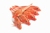 Red Tub gurnard fishes on white background