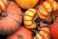 Close-up of pumpkins