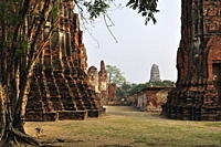 Wat Maha That, Ayutthaya, UNESCO World Heritage Site, Thailand, Southeast Asia, Asia