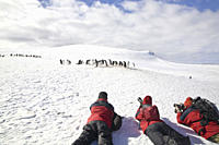 Photographers with adult gentoo penguins Pygoscelis papua on Barrentos Island in the Aitcho Island Group, South Shetland Islands, Antarctica Southern ...