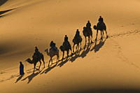 Camel caravan riding through the sand dunes of Merzouga, Morocco, North Africa, Africa