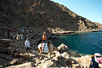Views of the return trip from Ras Abu Galum to Blue Hole With Divers, Camels and their Kit with the last of the days light South Sinai Egypt