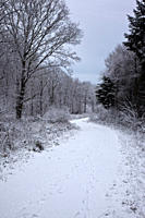 England, Wiltshire, nr Malmesbury. A snow covered path leading through a forest in winter.
