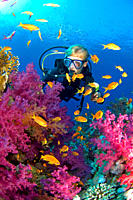 diver in coral reef Egypt, Red Sea
