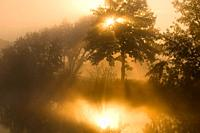 Mist at sunrise, reflection in dead arm of river Regnitz, riparian forest, Bavaria, Germany