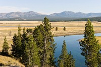 Trees, water and meadow in Yellowstone National Park