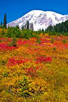 Mount Rainier in Autumn