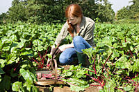 Young woman with fresh beetroot in basket