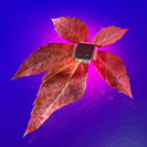 Electronic chip on leaf against blue background
