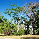 botany garden, Jardín Botánico de Cienfuegos, Cuba