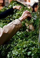 A woman selecting some herbs at a farmer´s market
