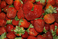 Strawberries,Fragaria, x, ananassa