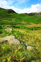 Fern covered fells, Near Grasmere, Lake District National Park, Cumbria, England