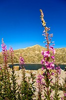 ´Estany de la Illa´  La Illa Lake  Madriu Valley. Andorra.