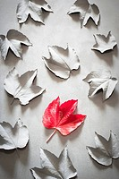 Red leaf and gray leaves