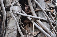 detailed view of rainforest tree roots