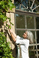 Mature woman picking grapes