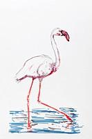 Flamingo, drawing, artist, Gerhard Kraus, Kriftel