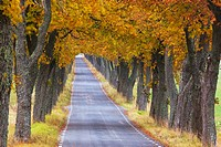 Autumn, Avenue, Julita, Sweden