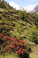 parco nazionale del gran paradiso, valle d´aosta, italia