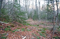 Swift River Railroad - Location of the Monahan Camp which was an logging camp located in the Sabbaday Brook drainage of the White Mountains, New Hamps...