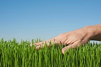 Male hand touching grass