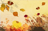 autumn leaves in illustration