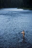 Canada, British Columbia, Fernie, Man fly fishing in river