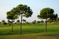Trees on a golf course, Club de Golf El Rompido, El Rompido, Cartaya, Costa de la Luz, Huelva region, Andalusia, Spain, Europe